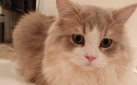ペットシッター 猫
