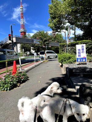 東京タワーと二匹
