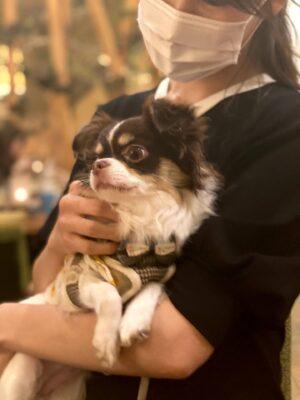 結婚式を眺める愛犬