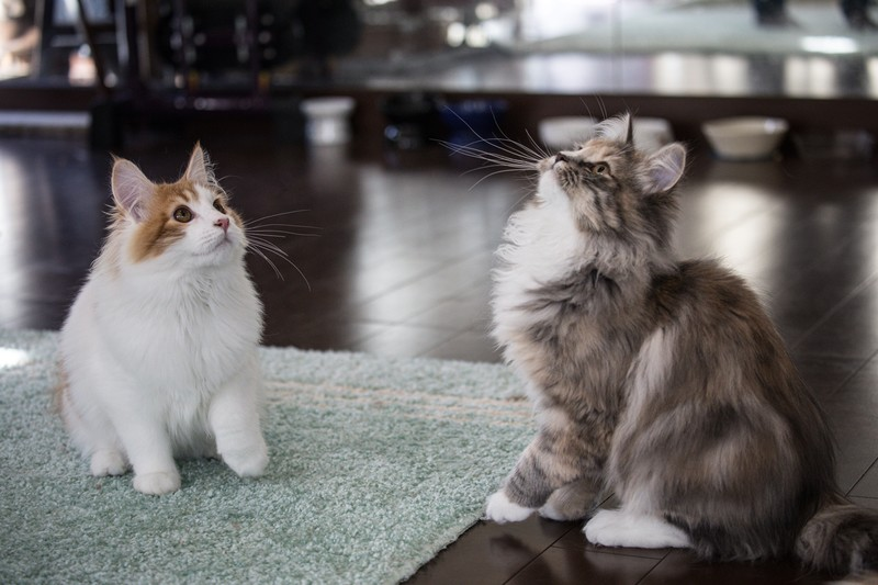 猫は犬よりも長生き?